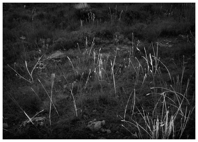Cerca de Montejo de la Vega. Segovia. Octubre 2014