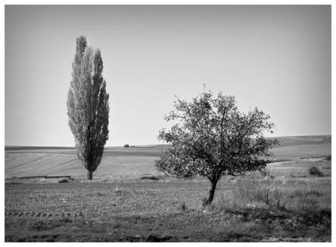 Rihauelas (Segovia). Octubre 2014