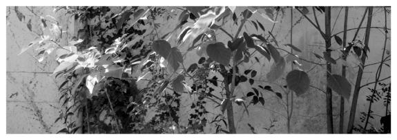 Jardín de Ana nuestra anfitriona en Toulouse