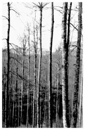 Bosque de Irati 1993